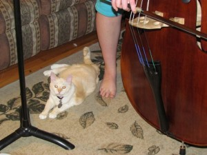 cat and bass